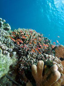 Free Bunaken Reefscape Stock Images - 33092534