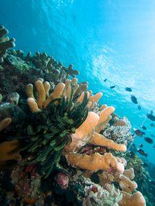 Free Bunaken Reefscape Royalty Free Stock Photo - 33092545