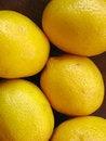 Free Lemons Stock Images - 3312854