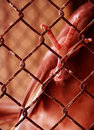 Free Dove S Claw On Rusted Netting Royalty Free Stock Images - 3313949