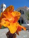 Free Orange Flower Royalty Free Stock Photo - 3318745