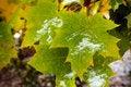 Free Canadian Maple Leaf Royalty Free Stock Image - 3319046