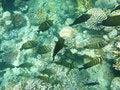 Free Tropical Fish Stock Photo - 3319800