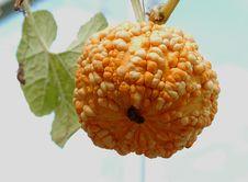 Free Ugly Fruit Stock Image - 3310361