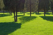 Free Cypress Shadow On Grass Field Royalty Free Stock Photos - 3310808