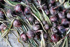 Free Onion Royalty Free Stock Photo - 3311365