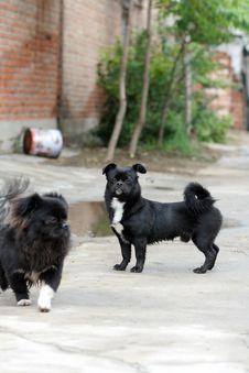 Free Dog Royalty Free Stock Photos - 3311548