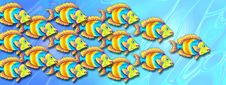 Free School Of Bright Tropical Fish Stock Photo - 3312240