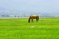 Free Horse Royalty Free Stock Image - 3312256