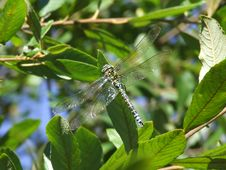 Free Dragonfly Settled Stock Photo - 3314340
