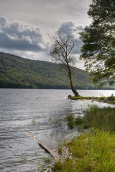 Coniston Water Shore Stock Images
