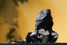 Free Spiny Tailed Iguana Royalty Free Stock Photos - 3314638