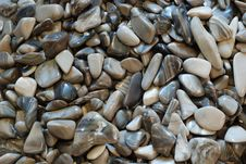 Free Grey Pebbles Royalty Free Stock Images - 3314839