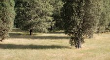 Free Trees And Grass Royalty Free Stock Photography - 3315657