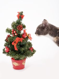 Free Kitten And A Christmas Tree Stock Photo - 3316120