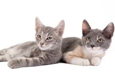 Free Two Kittens Lying Down Royalty Free Stock Photo - 3316225