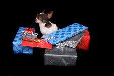 Chihuahua And Presents Stock Images