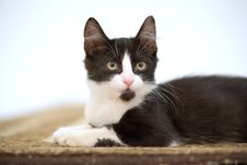 Free Kitten On The Carpet Stock Photo - 3316310