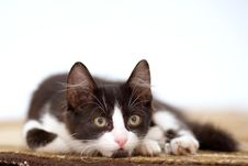 Free Kitten On The Carpet Royalty Free Stock Photography - 3316317