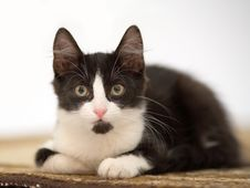Free Kitten On The Carpet Stock Photos - 3316363