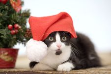 Free Kitten And Christmas Tree Royalty Free Stock Image - 3316806