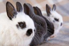 Four Bunny On The Blanket Stock Photos