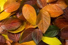 Free Gold Leaves 2 Stock Photo - 3317050