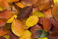 Free Gold Leaves 3 Stock Photography - 3317052