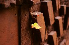 Free Leaves On Brick Wall Royalty Free Stock Images - 3317199