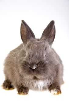 Free Grey Bunny, Isolated Stock Images - 3317224