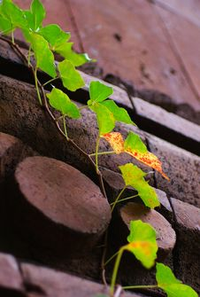 Free Leaves On A Brick Wall Stock Photo - 3317260