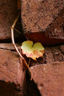 Free Leaves On A Brick Wall Stock Images - 3317274