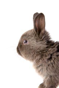 Free Grey Bunny, Isolated Stock Photo - 3317290