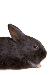 Free Black Bunny, Isolated Stock Photo - 3317310