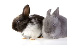 Free Two Bunny, Focus On The Black Royalty Free Stock Photos - 3317318