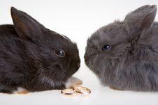 Free Two Bunny And A Wedding Rings Royalty Free Stock Image - 3317406