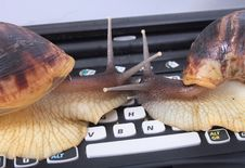 Free Snails And Keyboard Royalty Free Stock Photography - 3317507