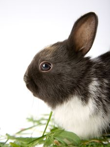 Free Bunny In The Grass Stock Photography - 3317562