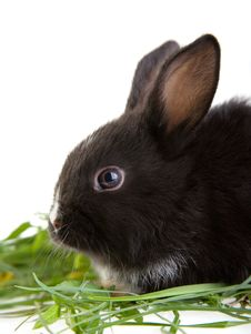 Free Bunny In The Grass Royalty Free Stock Images - 3317639