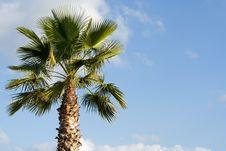 Free Palm Tree Royalty Free Stock Image - 3318136