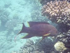 Free Tropical Fish Stock Images - 3319774