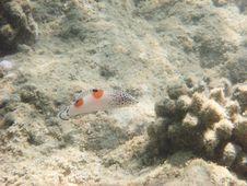 Free Angelfish Stock Photos - 3319793