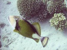 Free Tropical Fish Stock Image - 3319811