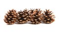 Free Row Of Pine Cones. Royalty Free Stock Photography - 33109007