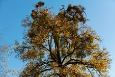 Free Autumn Trees Stock Photos - 33103083