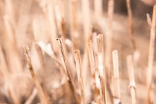 Free Straw Texture For Background Stock Images - 33103214