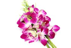 Free Pink Orchid Isolated On White Stock Photography - 33105732