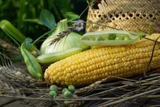 Ear Of Corn, Peas, Onion And Straw Hat. Stock Photo