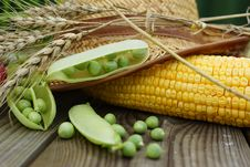 Green Pot, Corn And Straw Hat. Royalty Free Stock Images