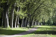 Free Alley Of Trees Royalty Free Stock Photography - 33113847